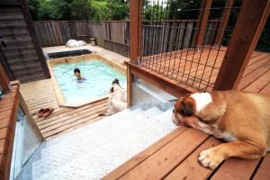 ウッドデッキからプールを… みんな楽しそう‼